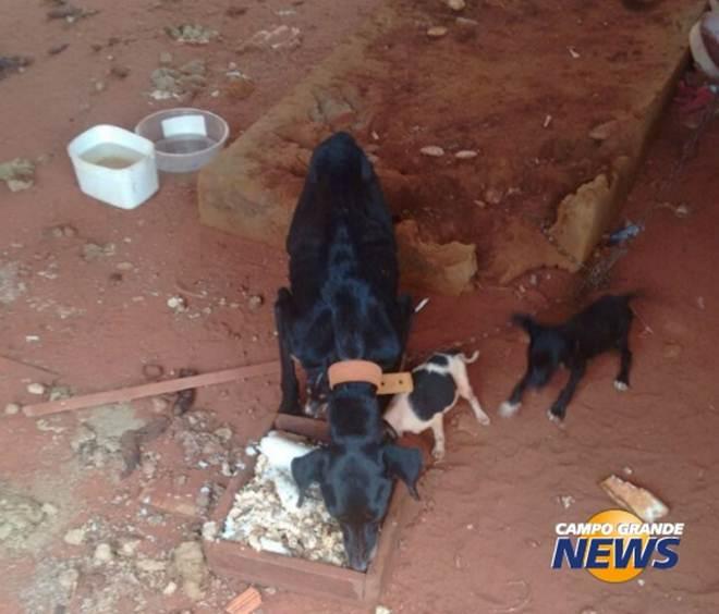 Cadela e filhotes estão há um mês abandonados em casa no Mato Grosso do Sul