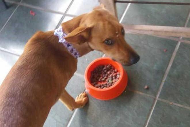 Cadela teve perna amputada ao ser ferida por disparo de arma de fogo em Ivinhema, MS