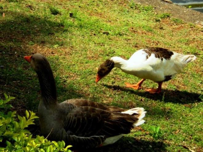 Mulher denuncia maus-tratos contra aves do Espelho d'Água, em Paranaíba, MS
