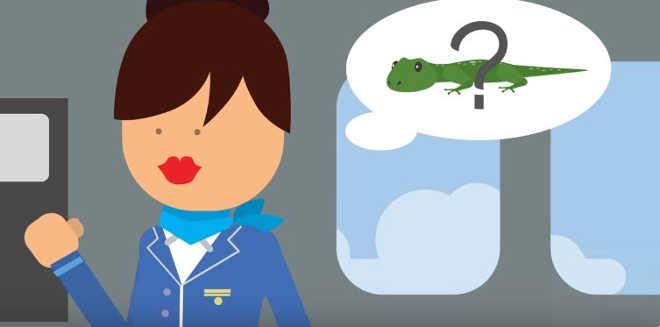 Como uma aeromoça pode ajudar a salvar elefantes, pássaros e tartarugas?