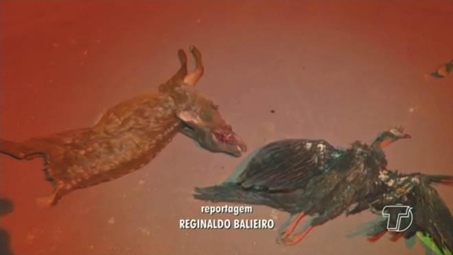 Operação do ICMBio detém trio por caça ilegal e porte de armas no Pará