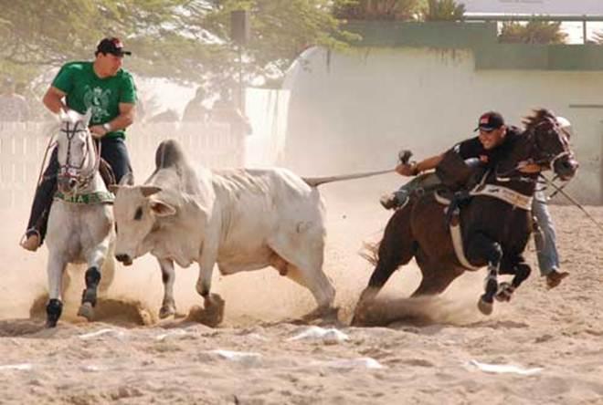 Juiz proíbe uso de animais durante Vaquejada do Parque Bem Mais em São Miguel do Taipu, PB