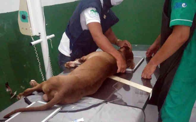 Cachorro amarrado em poste na PB foi baleado por vingança, diz delegado