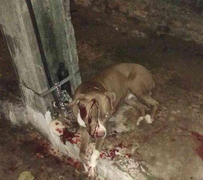 Criminoso amarra cachorro em poste e atira duas vezes contra animal em João Pessoa, PB; vídeo