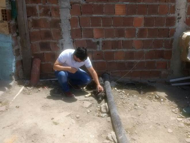 Cão vítima de maus-tratos é resgatado pela GPA em Caruaru, Agreste de PE
