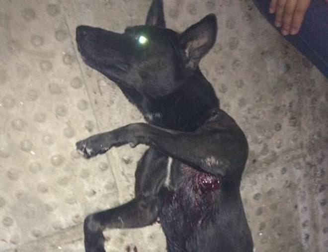 Cachorro é baleado em Camaragibe, Recife (PE) e precisa passar por cirurgia