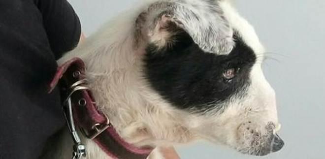 Cão que perdeu parte do focinho precisa de ajuda para reconstrução facial