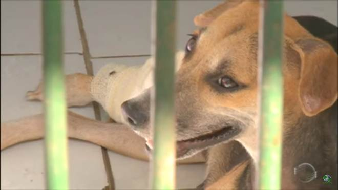 Superlotada, ONG no Piauí pede que pessoas adotem animais de abrigo