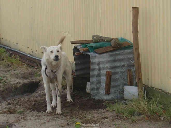 Associação de defesa dos animais alerta para o envenenamento de cães em Prado, Portugal