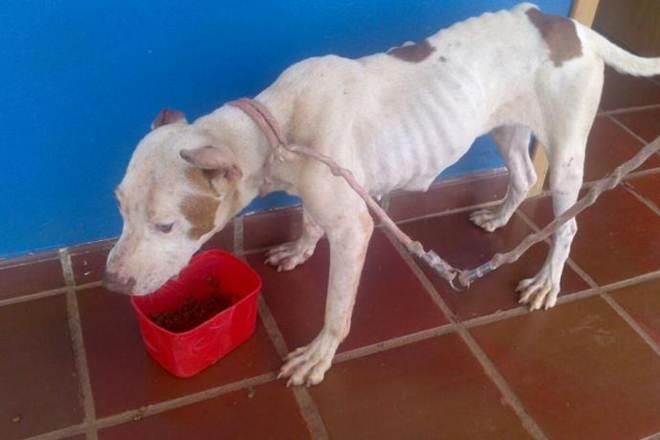 Após denúncia, cadela com sinais de maus-tratos é resgatada em Apucarana, PR