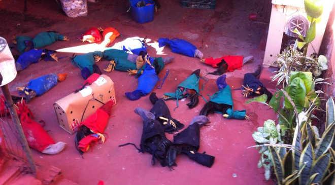 Polícia fecha 'fábrica' de galos para rinha em Cambé, PR