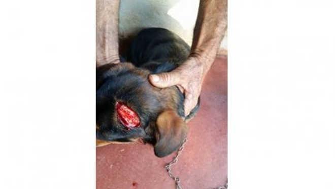 Internauta denuncia maus-tratos a cachorro em Diamante d'Oeste, PR