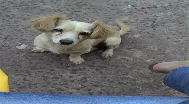 Moradora de Foz do Iguaçu (PR) acusa vizinho de matar cachorra a pedradas