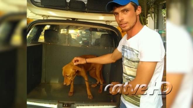 Em situação de maus tratos, cadela é resgatada por moradores e PM em Ouro Verde do Oeste, PR