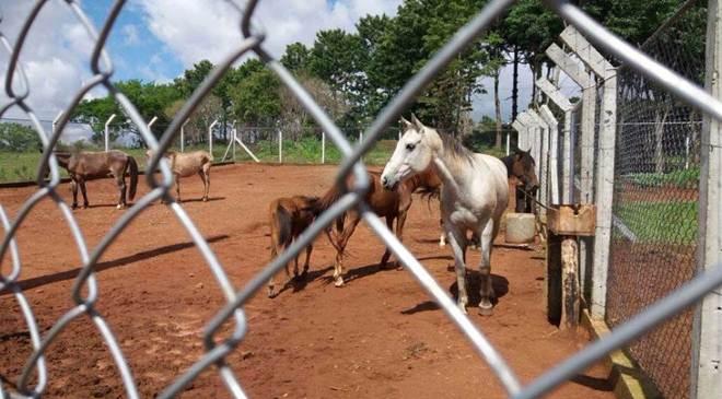 Nove cavalos são sequestrados de Centro de Referência de Animais em Risco em Ponta Grossa, PR