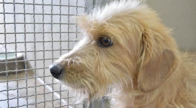 Em cinco meses, mais de 300 cães já passaram pelo CRAR, em Ponta Grossa, PR
