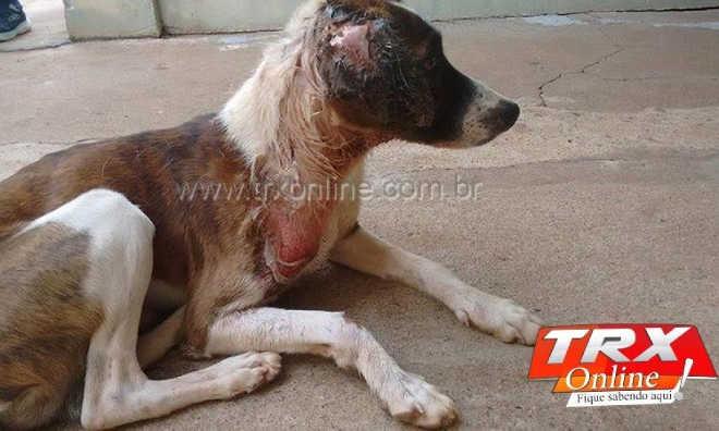 Homem é detido por maus-tratos contra cães em Terra Roxa, PR