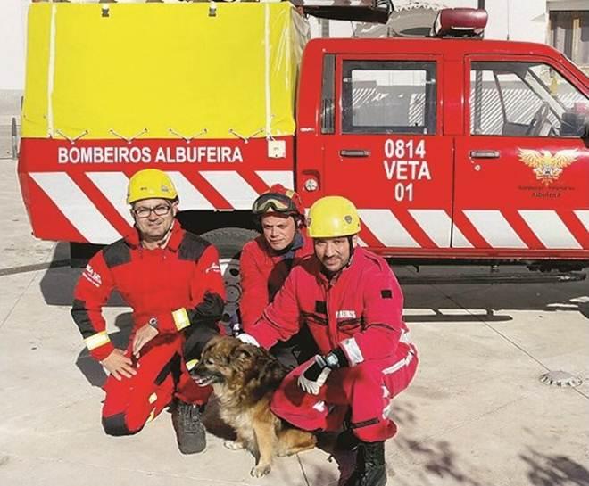 Bombeiros resgatam cão que ficou preso em falésia em Portugal