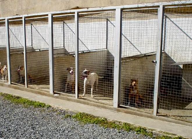 Portugal: AMAL estuda viabilidade de criação de dois Canis Intermunicipais na região