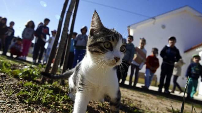 Do gatil para uma escola, Didi encontrou uma família de 28 crianças