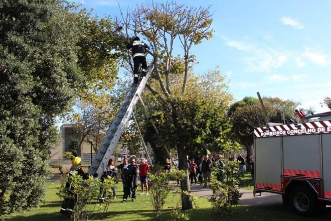 Portugal: Bombeiros salvam gato no Parque João de Deus, em Espinho
