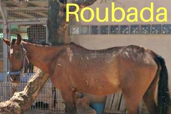 Assaltam canil e espancam animal até à morte em Loulé, Portugal