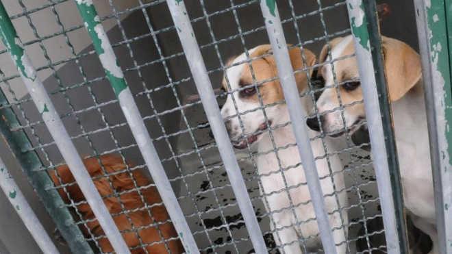 Portugal: Madeira registrou 15 crimes de maus tratos a animais nos últimos dois anos