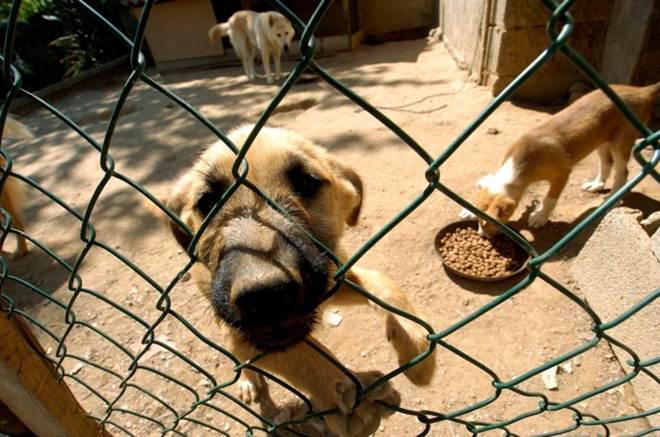 Portugal: GNR resgatou 37 animais suspeitos de serem vítimas de maus-tratos