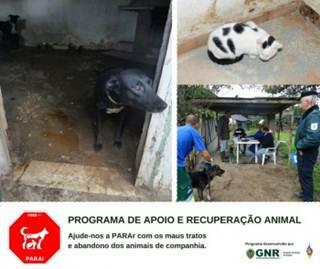 Policia e prefeitura resgatam de 37 animais por maus tratos e abandono em Moita, Portugal
