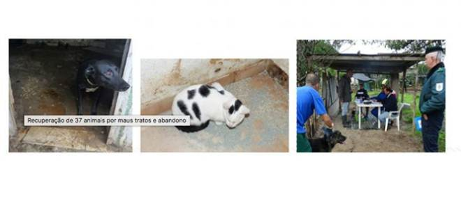"""Direito de Resposta – Artigo publicado em 10 Nov. """"Recuperação de 37 animais por maus tratos e abandono maus"""""""