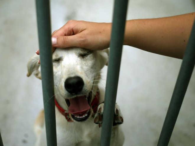 Portugal: Governo aceita proposta do PAN e dá 1 milhão para canis municipais