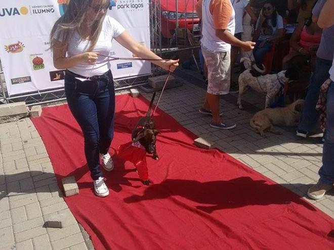 Ação que uniu consciência e diversão no RJ encerra com adoção de 44 animais