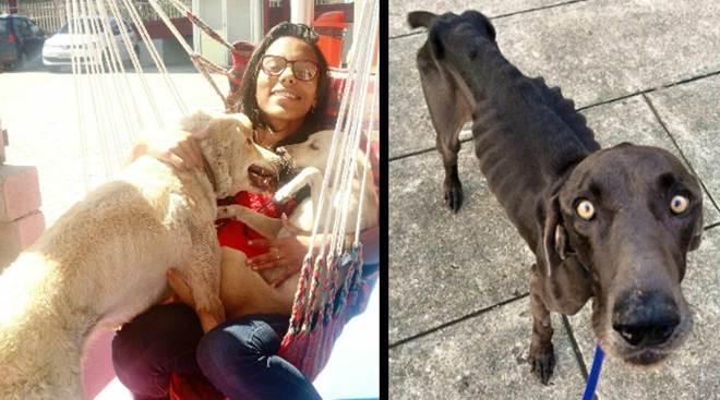 """Na luta contra maus-tratos e abandono de animais, aluna de Nova Iguaçu (RJ) tem projeto """"bicho amigo"""" aprovado"""