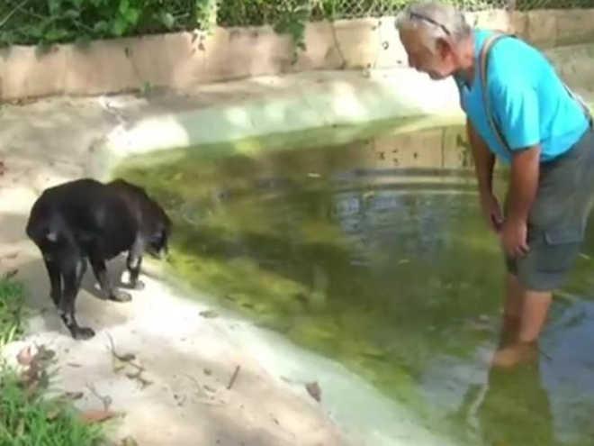 Arquiteto volta dos EUA, cria abrigo e resgata 200 cães: 'pego como filhos'
