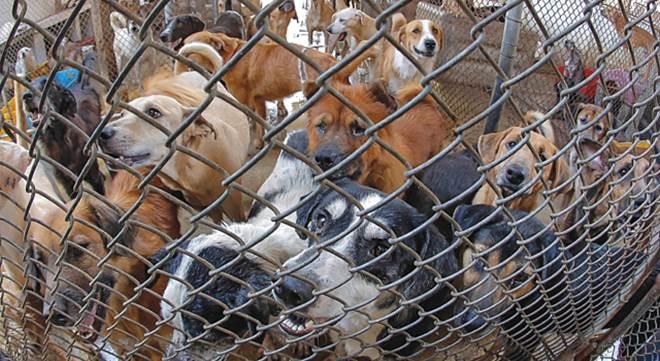 Com dívida de R$ 17 mi, Suipa luta para manter serviço de proteção animal