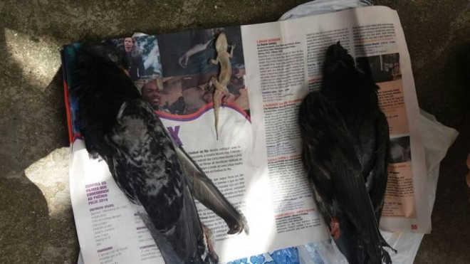 Pássaros e répteis morrem após ficarem presos em muro com supercola na zona sul do Rio