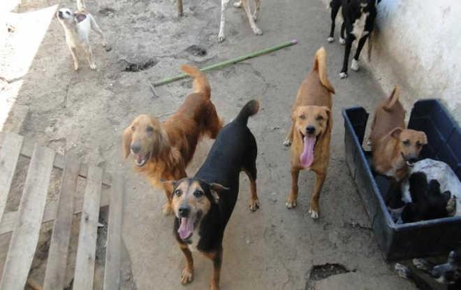 Coordenadoria de Bem-Estar Animal resgata cães vítimas de maus-tratos em Petrópolis, RJ