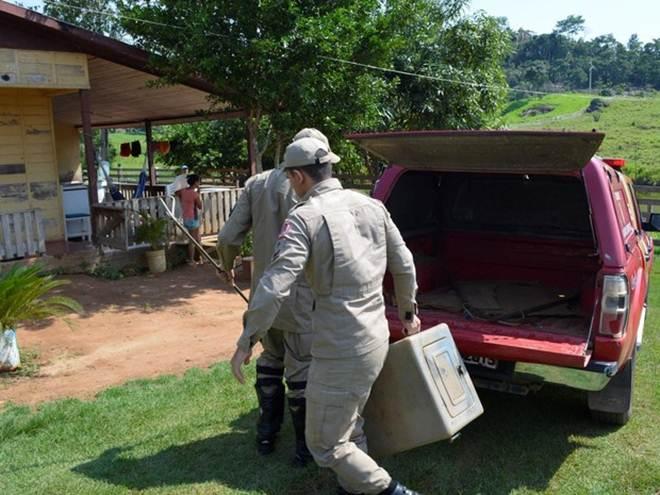 Bombeiros resgatam mais de 130 animais silvestres em casas de RO