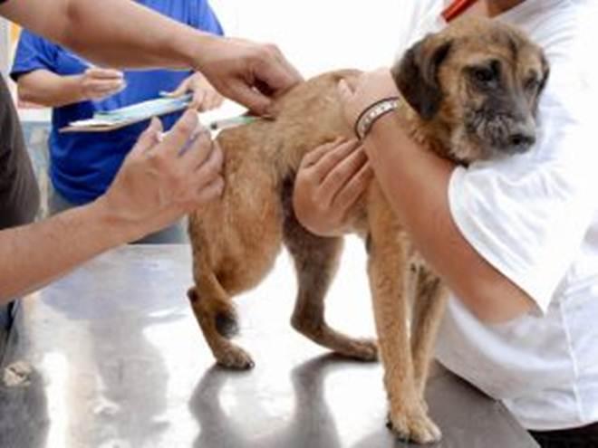 Vacinação de cães e gatos supera a marca de 5 mil em Ji-Paraná, RO