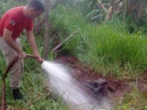 Bombeiros resgatam vaca de buraco com dois metros em Rolim de Moura, RO