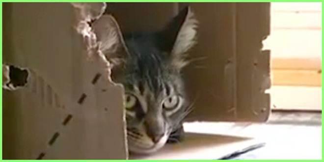 Homem arrisca a própria vida pra salvar a vida do gato Marcelino
