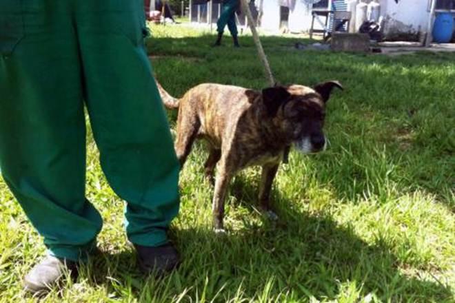 Seda atende cão resgatado no rio Arroio Dilúvio em Porto Alegre, RS