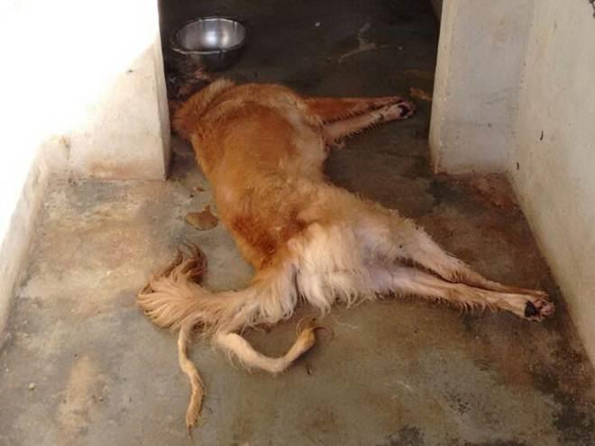 Polícia investiga morte de cães em São José do Ouro, no RS