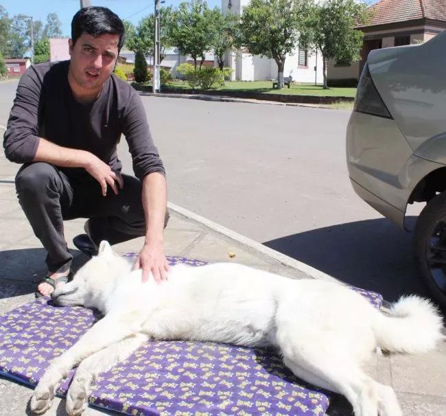 Envenenamento de cão causa revolta em Vale Verde, RS