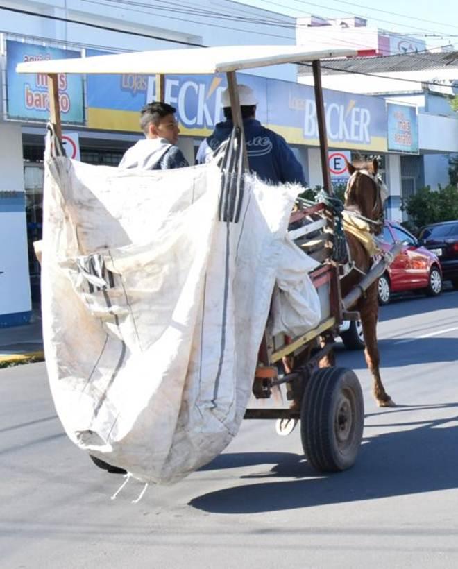 Por uma lei que proíba uso de cavalos nas carroças e charretes
