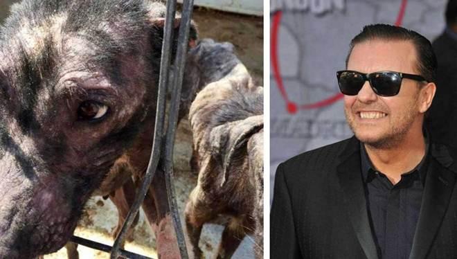 Tuitada de ator de Hollywood salva 650 cachorros