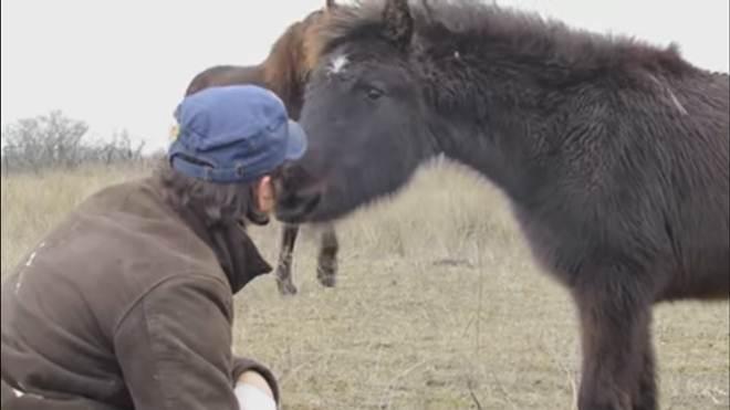 Cavalo selvagem agradece resgatista por libertá-lo das correntes
