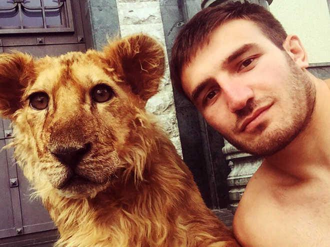 Lutador russo adota leoa e tira garras para poder treinar com ela