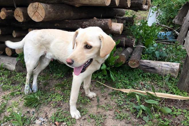 Animal é envenenado e encontrado morto na porta da redação de jornal, em Armazém, SC