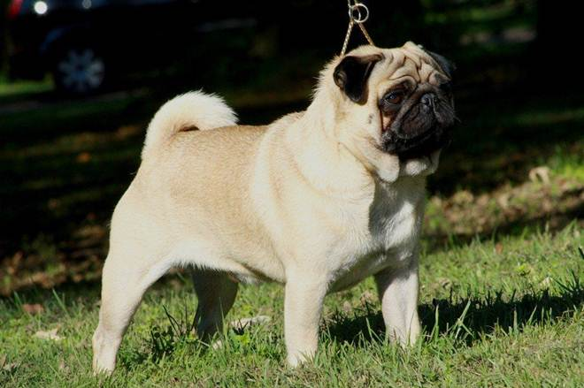 Homem é preso ao tentar vender cão sequestrado em Criciúma, SC